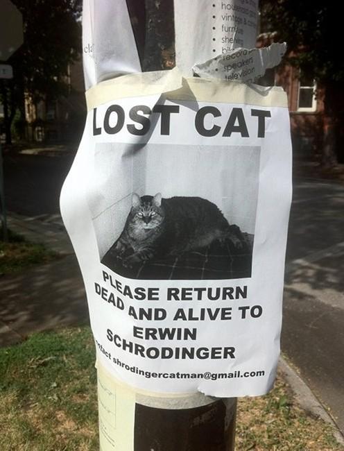 Schrödinger cat meme quantum mechanics in a physics degree